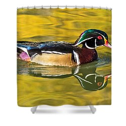 Wood Duck On Golden Pond Shower Curtain