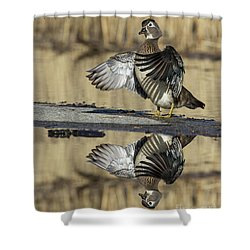 Shower Curtain featuring the photograph Wood Duck Reflection by Mircea Costina Photography