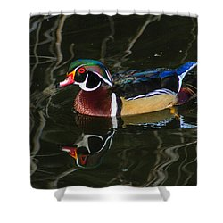 Wood Duck Reflections Shower Curtain by Robert Hebert