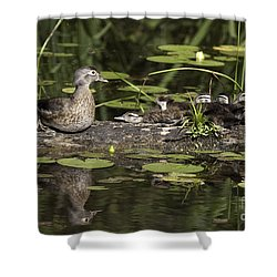 Wood Duck With Her Ducklings Shower Curtain