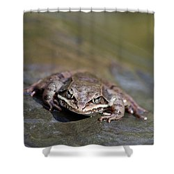 Shower Curtain featuring the photograph Wood Frog Close Up by Christina Rollo