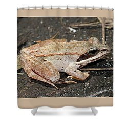 Wood Frog Shower Curtain by Doris Potter