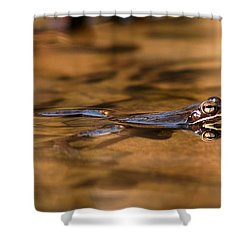 Wood Frog Reflecting On Golden Pond Shower Curtain