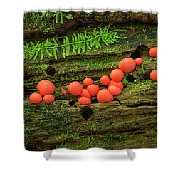 Wood Fungus Shower Curtain