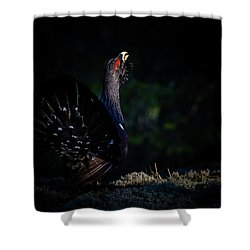 Wood Grouse's Sunbeam Shower Curtain by Torbjorn Swenelius