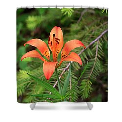 Wood Lily Also Called Prairie Lily Or Western Red Lily Shower Curtain by Louise Heusinkveld