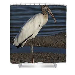 Wood Stork In The Final Light Of Day Shower Curtain