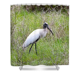 Wood Stork In The Marsh Shower Curtain