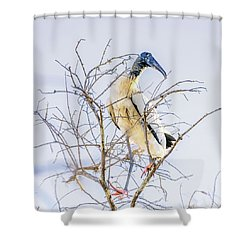 Wood Stork Sitting In A Tree Shower Curtain