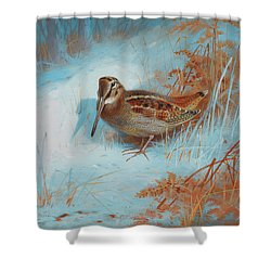 A Woodcock In The Snow Shower Curtain