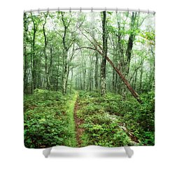 Shower Curtain featuring the photograph Wooded Trail by Alan Raasch
