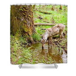 Woodland Caribou Shower Curtain