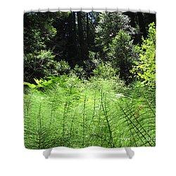 Woodland Ferns Shower Curtain
