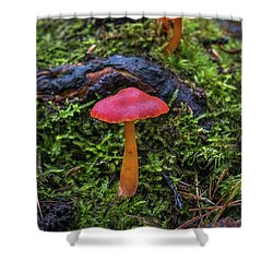 Shower Curtain featuring the photograph Woodland Floor Decor by Bill Pevlor