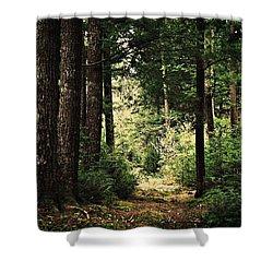 Woodland Hush Shower Curtain by Joy Nichols