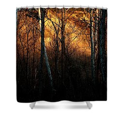 Woodland Illuminated Shower Curtain by Bruce Patrick Smith