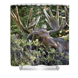 Woodland Moose Shower Curtain