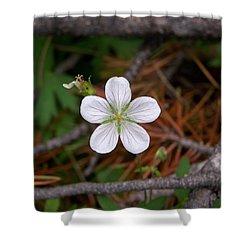 Woodland Wildflower Shower Curtain