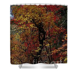 Shower Curtain featuring the photograph Woods In Oak Creek Canyon, Arizona by Frank Stallone