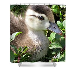 Woody Duckling Shower Curtain