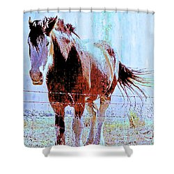 Workhorse Shower Curtain by Cynthia Powell