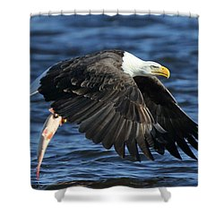 Shower Curtain featuring the photograph Working Hard For Dinner by Coby Cooper