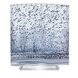World Of Birds Shower Curtain