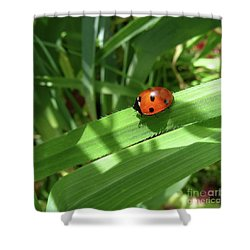 World Of Ladybug 1 Shower Curtain by Jean Bernard Roussilhe