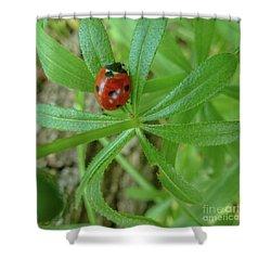 World Of Ladybug 3 Shower Curtain by Jean Bernard Roussilhe