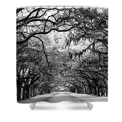 Wormsloe Shower Curtain