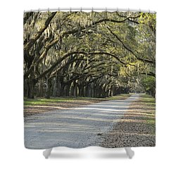 Wormsloe Entrance Road Shower Curtain