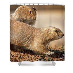Worried Prairie Dog Shower Curtain by Robert Frederick