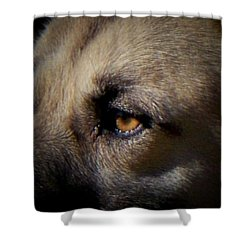 Shower Curtain featuring the photograph Wounded by Betty Northcutt