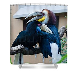 Wreathed Hornbills Shower Curtain