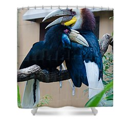 Wreathed Hornbills Shower Curtain by Donna Brown
