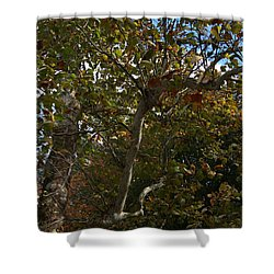 Sunlit Branches Of Autumn Shower Curtain