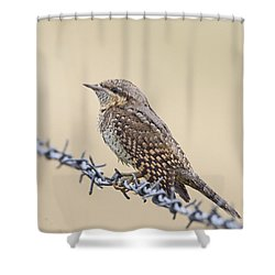 Wryneck On Wire Shower Curtain