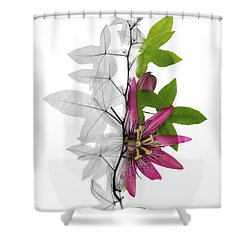 X-ray Of A Passion Flower Shower Curtain by Ted Kinsman
