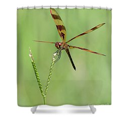 X Wing Dragonfly Shower Curtain