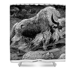 YAK Shower Curtain by Granger