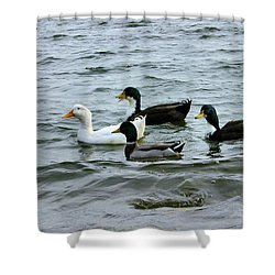 Yak Yak Yak One In Every Crowd Shower Curtain
