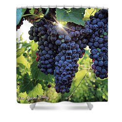 Shower Curtain featuring the photograph Yakima Valley Grapes by Lynn Hopwood
