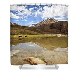 Yaks In Ladakh Shower Curtain