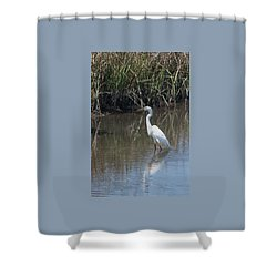 Shower Curtain featuring the photograph Yawkey Wildlife Refuge - Great White Egret II by Suzanne Gaff