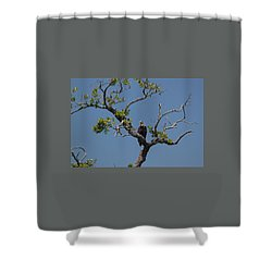 Yawkey Wildlife Reguge - American Bald Eagle Shower Curtain by Suzanne Gaff