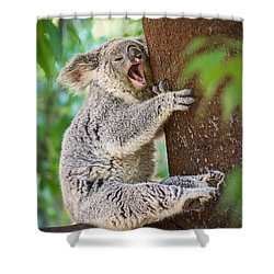 Yawn And Stretch Shower Curtain by Jamie Pham