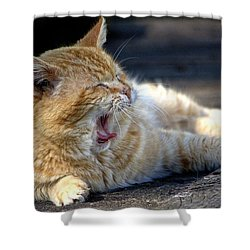 Shower Curtain featuring the photograph Yawning by Chriss Pagani