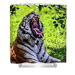 Shower Curtain featuring the photograph Yawning Tiger by Joann Copeland-Paul