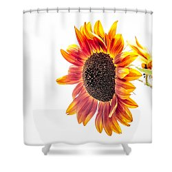 Shower Curtain featuring the photograph Yeah, I Hold On, I Hold On by Wade Brooks