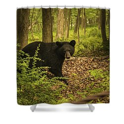 Yearling Black Bear Shower Curtain